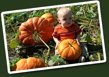 PumpkinPatchJustPiddlinSmall