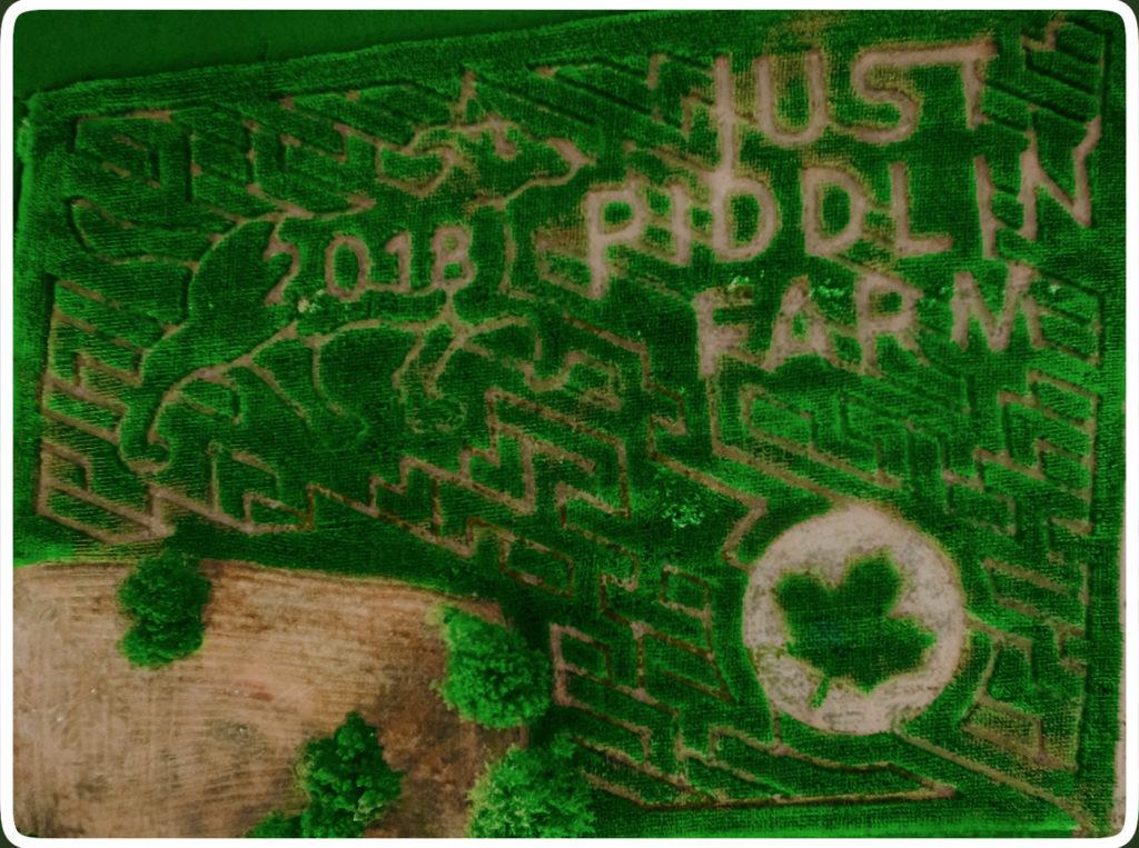 Corn Maze Just Piddlin Farm 2018